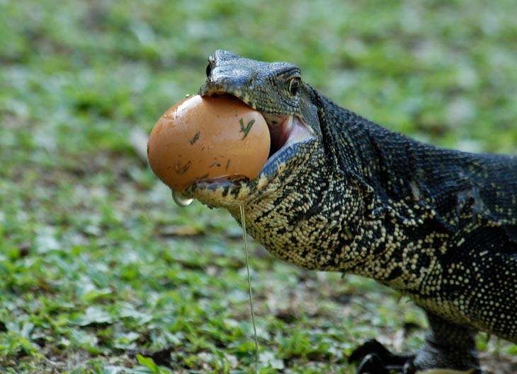 Но яйцы жрут, только хруст стоит.