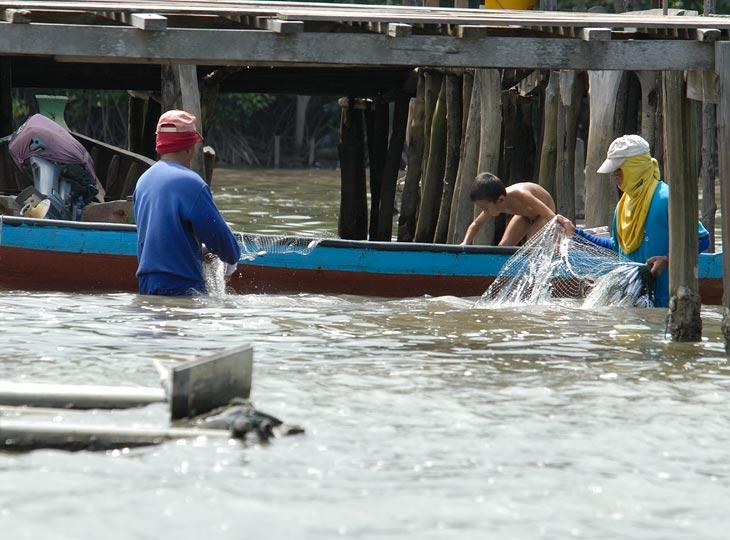 Учитывая стекающие в воду фекалии, особой прикормки для рыб не надо. Сети можно ставить прямо под домом между свай.