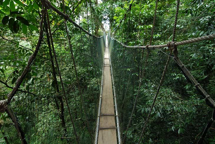 Выше были непроходимые заросли через которые я иногда сослепу проходил. А тут вот очередной жуткий подвесной мост. С этой чахлой конструкции удобно фотографировать жизнь верхнего яруса леса. Собственно помимо подобного моста в этот самый ярус никак иначе и не попадешь.