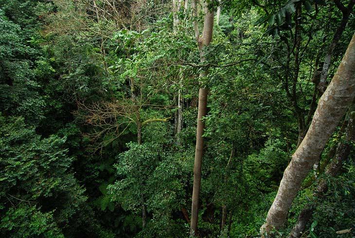 Вид с подвесного моста на творящееся внизу безобразие. До земли более сорока метров, однако кроны деревьев и прочая ботва торчат высоко над головой. В лесу сыро. Отовсюду слышно журчание воды. Капли кажется конденсируются прямо перед моим носом в воздухе и летят вниз сквозь завесу буйнопомешанной листвы.