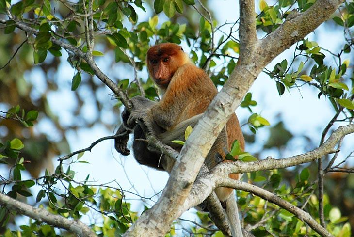 Обезьяна, нет даже не обезьяна, а пьяный тролль с огромным, как вьетнамский кабачок носом.