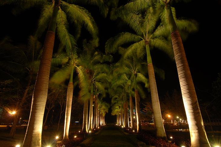 Окультуренная ботва в ночной подсветке. Даже орехи с пальм обгрызли, чтобы никого случайно не пришибло.