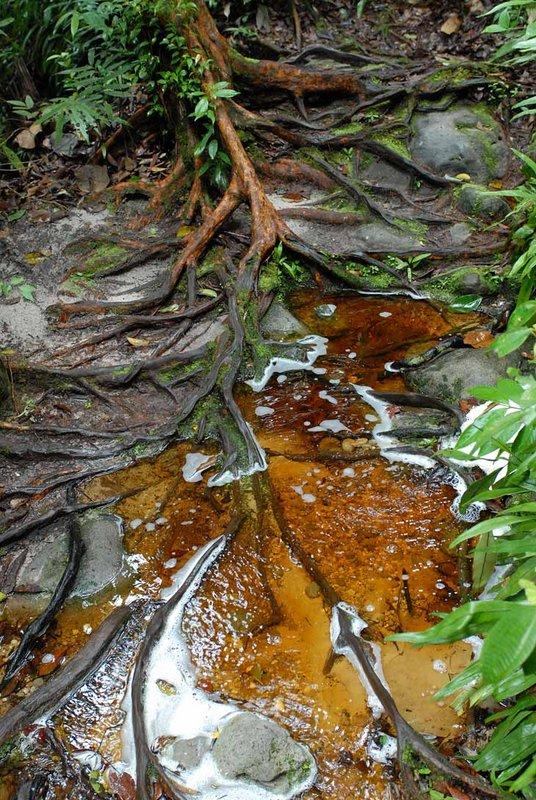 Деревья выделяют какой-то яркий сок прямо в воду. Стекая от корней окрашенные ручьи впадают в море. Потом недалеко от берега можно наблюдать переливы воды разного цвета.