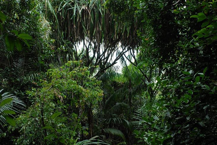 Вновь бесконечная ботва джунглей.