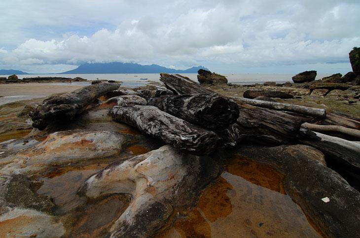 Вышли к морю. Необычный каменный пляж с дровами.