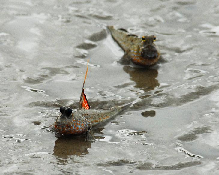 Причем делают это с воистину тараканьей скоростью. Запечатлеть хоть одну рыбешку в движении нам так и не удалось.
