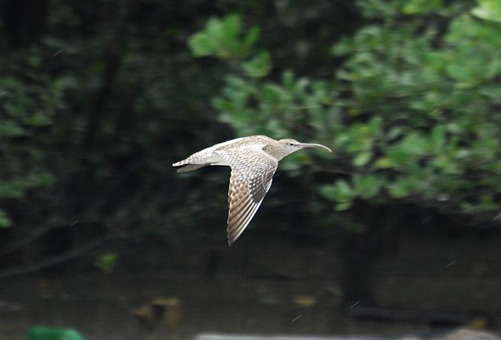 Над болотом летают всяческие птицы.
