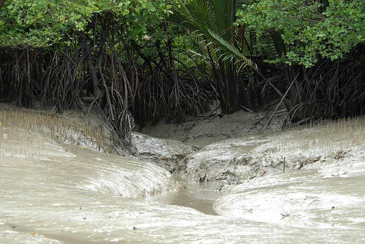 Это место с наибольшей концентрацией крокодилов. Но уровень воды не позволил нам зайти в протоку.