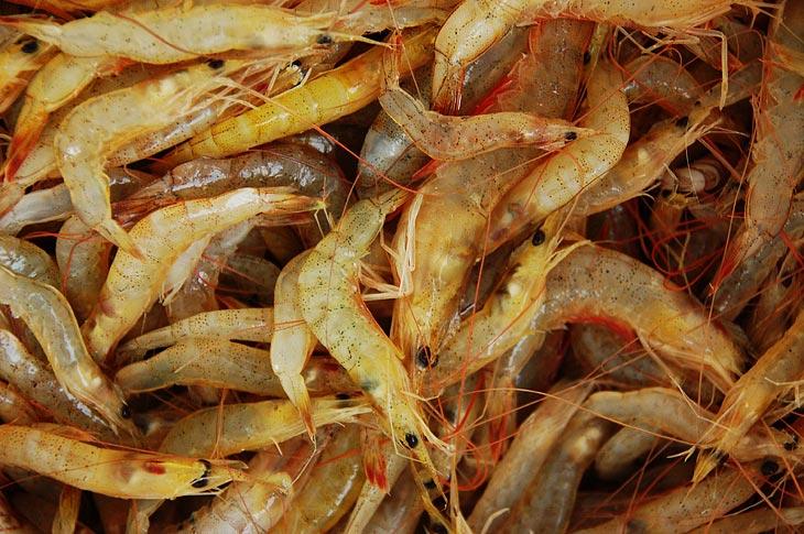 А это то, что выколупывают из сетей рыбаки. Вероятно промысел креветки наиболее выгоден.