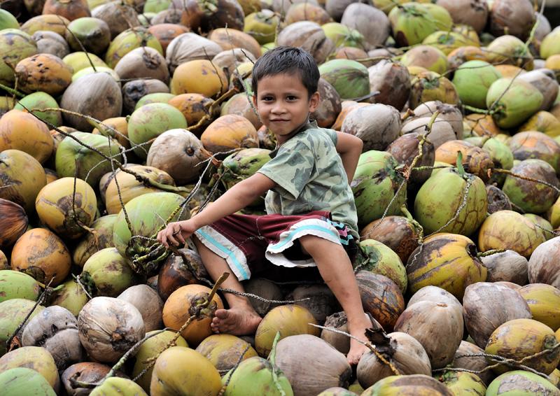 В свободное от новогодних праздников время аборигены собирают кокосы и делают из них какую-то неведомую хрень.