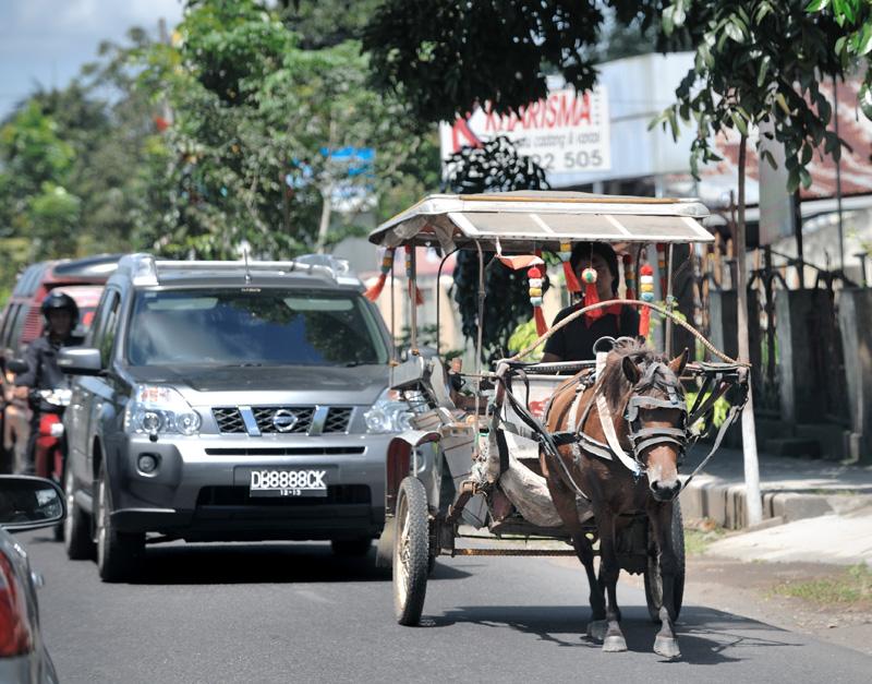 Флегматичный гужевой транспорт не стремится уступать дорогу, собирая автомобильные заторы на узких улочках небольших городков Северного Сулавеси.