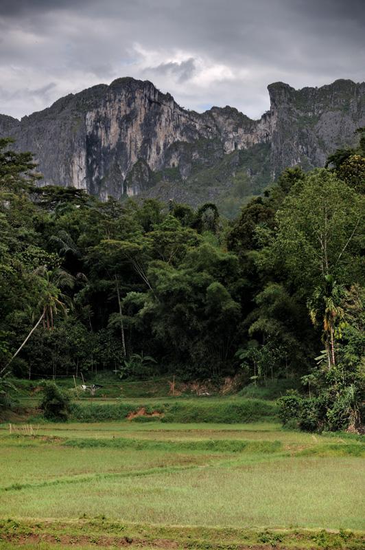 Нависающие отвесные склоны, буйство джунглевой растительности и грозное горное небо делают землю тораджей похожей на гигантский зеленый храм, с протекающим в дождь куполом.