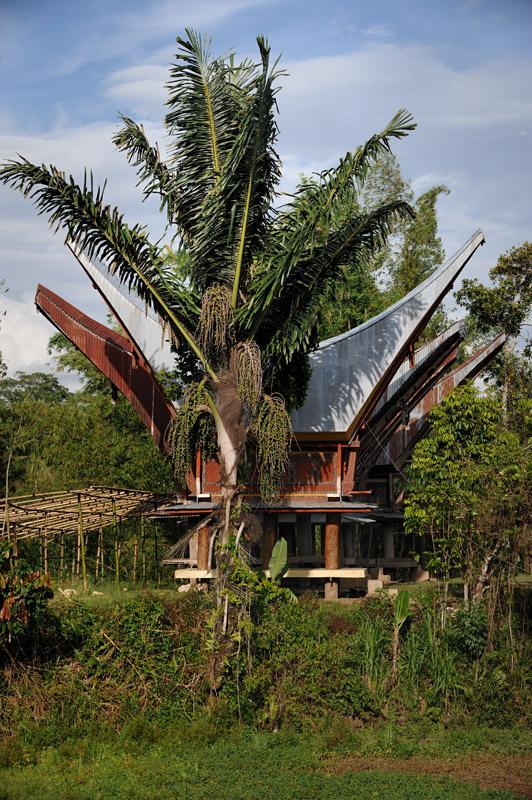 Тораджами, т.е. «горцами», эту группу племен прозвали соседи по острову. Общего же самоназвания аборигены не имеют, не считая себя единым народом. Когда-то их объединяли лишь общие анимистические верования.
