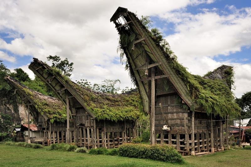 Крыши из бамбуковых дощечек постепенно обрастают папоротником, выгодно отличаясь от металлических кровель.