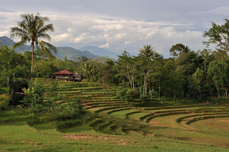 Помимо эффектно выглядящих орошаемых террас для возделывания риса, аборигены не брезгуют и другими типичными для данных широт культурами от кукурузы и сахарного тростника, до кокосовых пальм и бананов. Иногда на затопленных рисовых полях разводят рыбу.