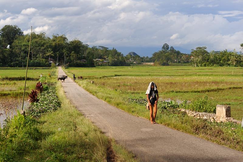 Однако, основой пищевого рациона тут традиционно является рис. Как и жители Суматры, тораджи готовят рис в бамбуковых стеблях. Пищу едят руками.