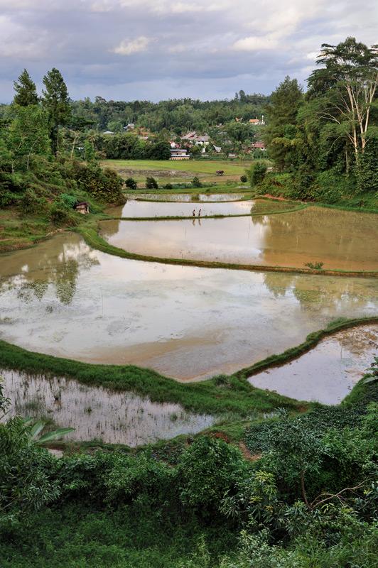 Остров большой, населения относительно мало, но каждый свободный клочок земли занят рисовым полем.