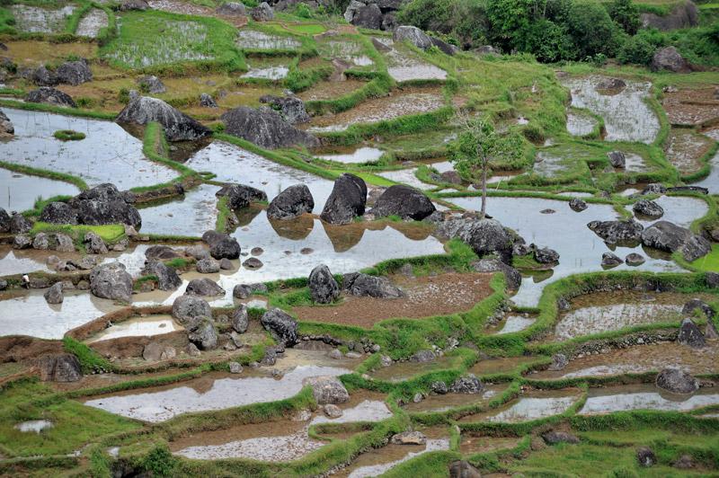 Что-то гипнотизирующее и притягивающее есть в этих рисовых полях. Картошка растет не так эстетично...
