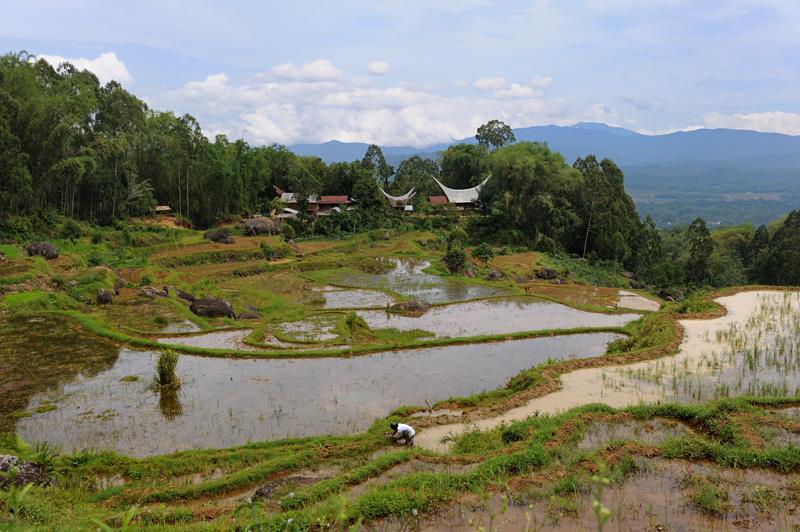 Очередное рисовое болотце.