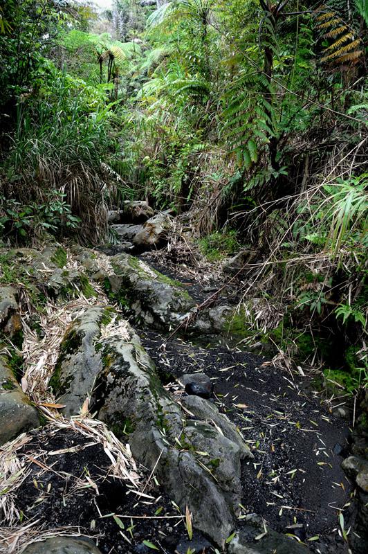 Тропы живописны, при этом особо не хожены и не загажены (что редкость для Индонезии).