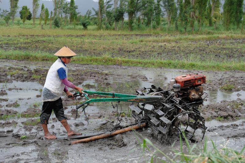 При том, что в целом островитян сложно обвинить в отсутствии механизации. В грязи рисовых полей копошатся мотоплуги.