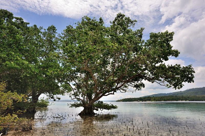 Скучающие в морской воде мангры — хорошее пристанище для потных каякеров.