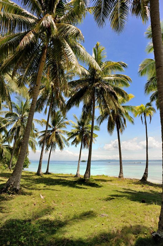 Причем, даже пальмы не вызывают особого интереса. Разомлев на жаре, лень подойти и забрать свежеупавший кокос.