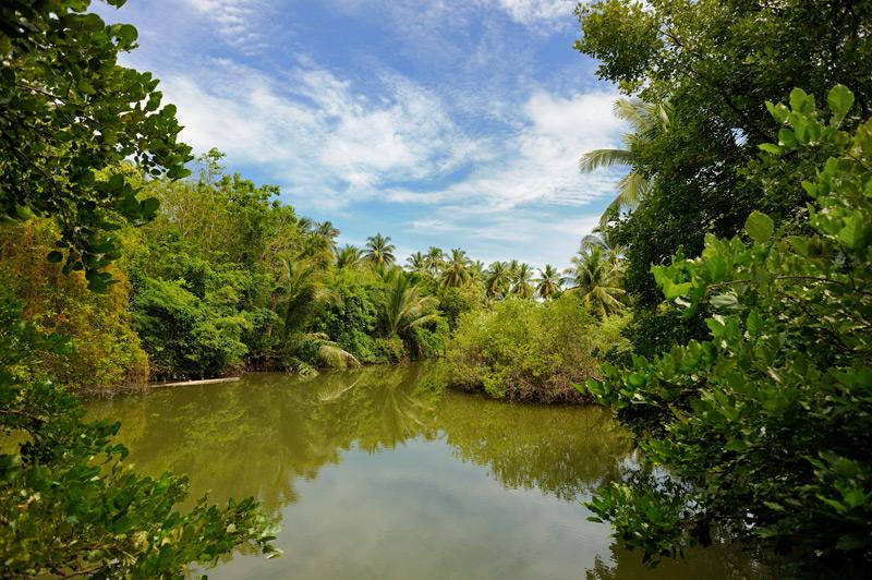На крохотном острове уместился и тропический лес, и пресный водоем.