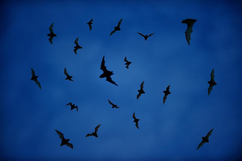 У летучих же мышей бурная активность только начинается.
