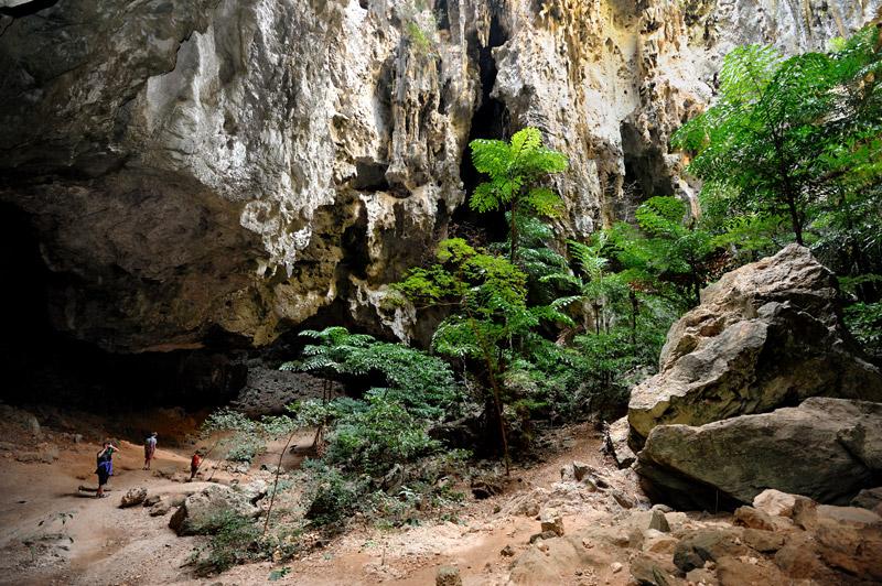 Сквозь дырки в потолке проникает солнечный свет, посему некоторые залы пещеры снабжены не только сталактитами и сталагмитами, но и вполне буйной тропической растительностью.