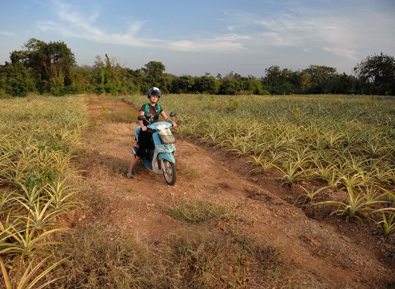 На этой картинке с ананасовыми полями позвольте завершить свой краткий рассказ.