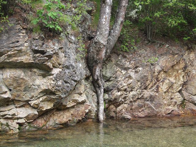 Вечнобудунное дерево. Во как сушняк мучает, такое толстое хлебало в воду сунуло.