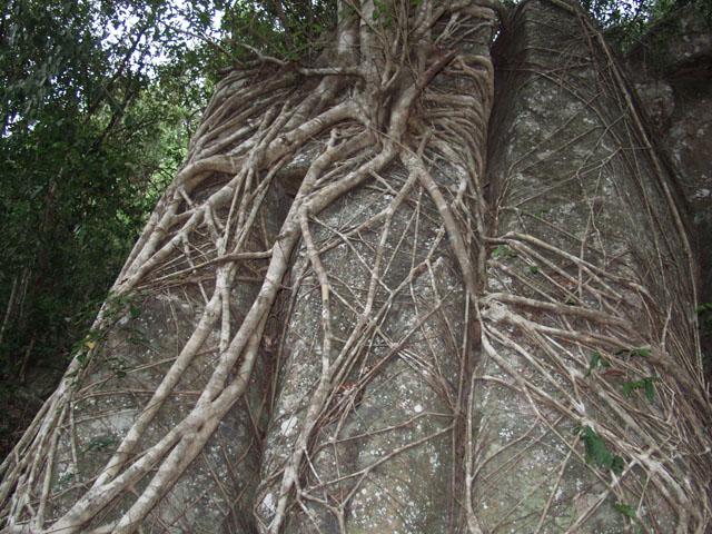 В джунглях. Сильно пахнет перебродившими тропическими фруктами. Жарко и хочется бухать.