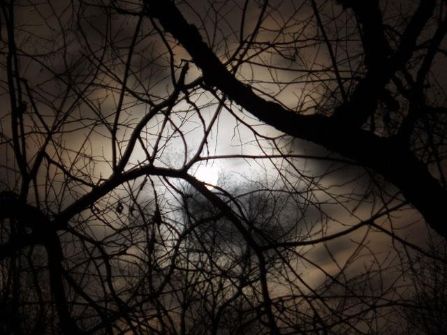 Лунное затмение. Кто там за что затмевался я не очень понял. Но порядку ради, запечатлел сие небесное тело сквозь арминскую растительность.
