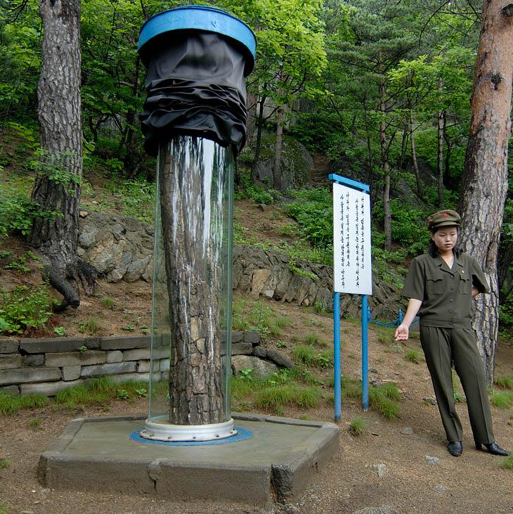 Экскурсия на гору. В стеклянных колбах находятся пни с письменами времен антияпонской борьбы. По-чучхейски необычный и самобытный музейный экспонат.
