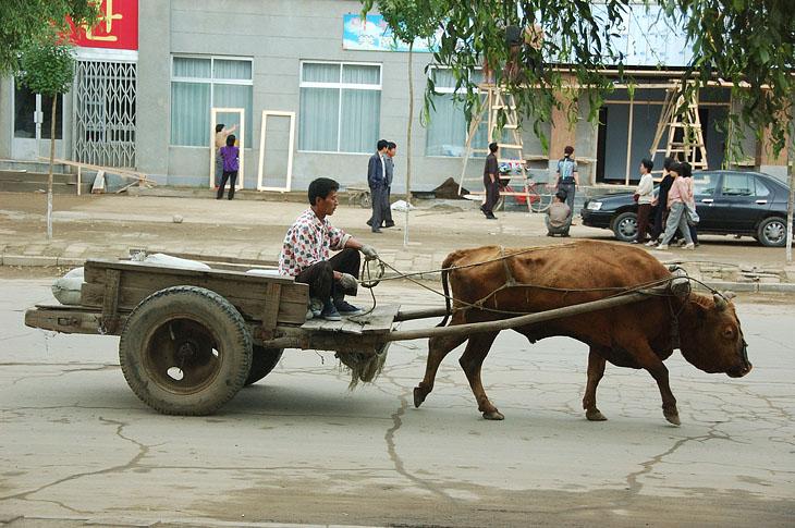 Зато можно долго изучать различные говяжьи транспортные средства. Животные перемещаются без лишней суеты и создают достаточно приятное впечатление на городских улицах.