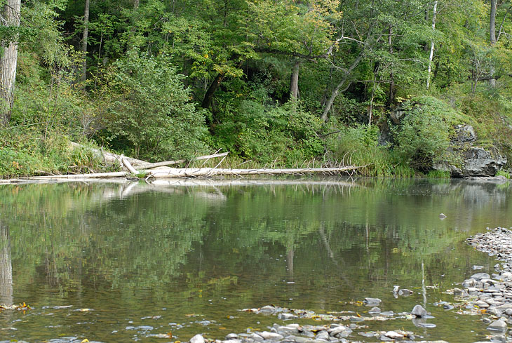 Вода в реке вполне в норме. У детенышей рыба ловилась на сыр. Интересно попробовать разные сорта. Этот вид наживки явно незаслуженно обойден вниманием рыбацкой общественности.