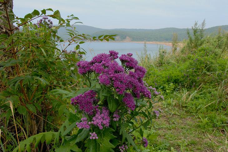 Острова в бурном осеннем цветении. Со всех сторон торчит какая-нибудь веселенькая ботаника.