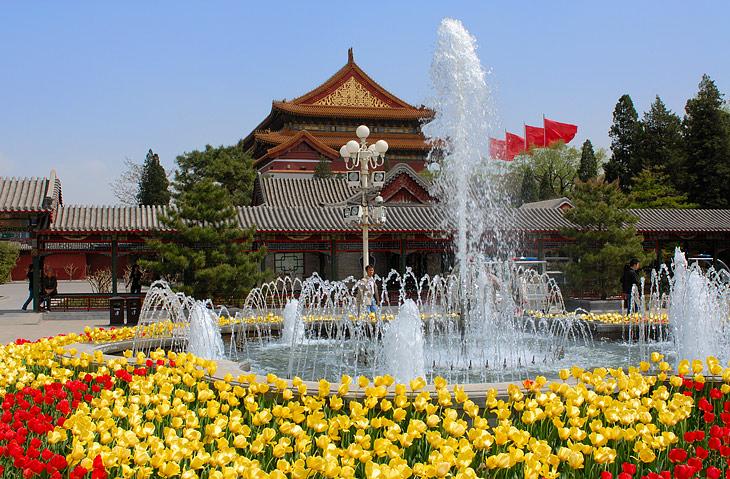 Пока мы батонились в Пекине, он расцвел не только лепестками сакуры, но и пышными клумбами тюльпанов.
