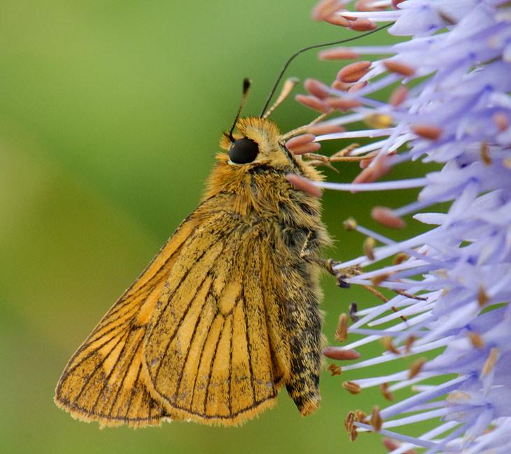 Бабочки, цветочки и прочая поебень, которой положено произрастать в это время года на островных территориях города Владивостока.