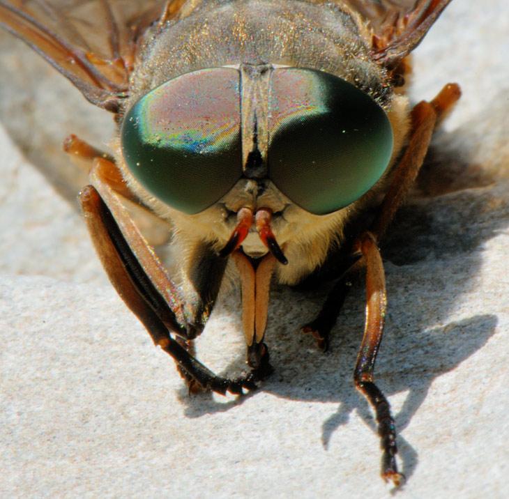 Тараща зеленые глаза и щелкая клювом, суетливые мухи никак не хотели достойно позировать для портрета на память.
