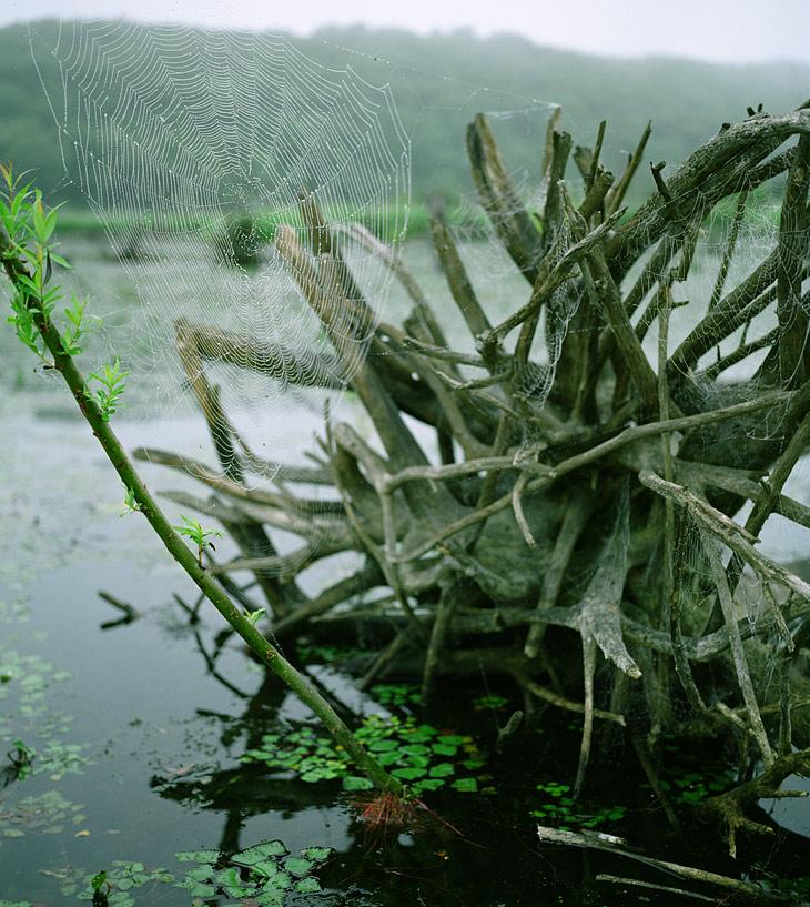 Вообще конечно по болоту нужно путешествовать в густом тумане. Только тогда, гребя в лабиринте паутинистых пней, тревожа веслом               журчащие пузыри болотного газа, приходишь в восторг от мрачного оптимизма окружающего мира тины и водяного ореха.