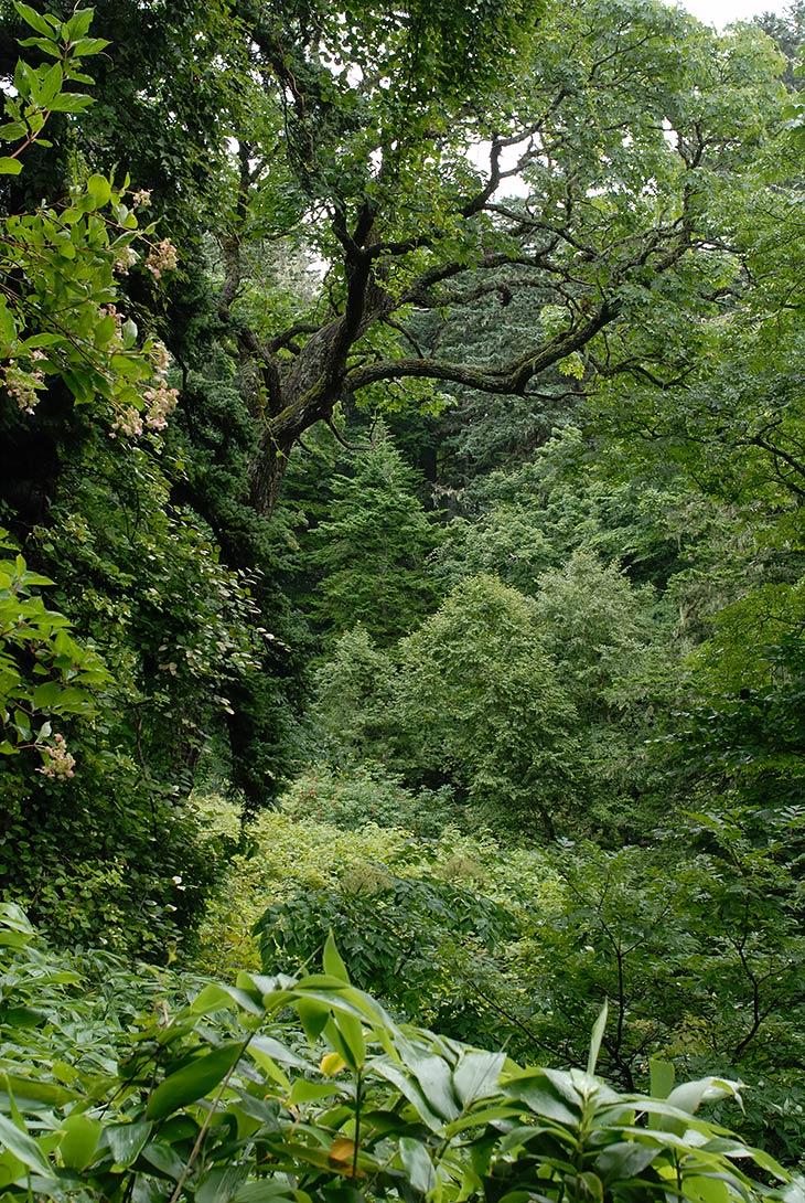Сильно удивил незнакомый запах леса. Точнее, отсутствие привычного в Приморье сильного запаха грибов и плесени, или терпкого запаха цветов в тропических джунглях. Кунаширский лес практически не пахнет.