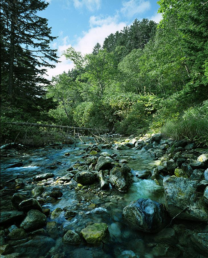 Только отсутствие водных насекомых и красочные камни напоминают, что вода в реке кислая и непригодна для жизни.