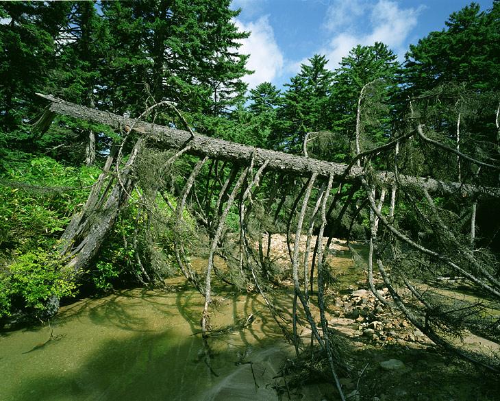 Особо стоит обратить внимание на определенную сложность в добыче пресной воды. Многочисленные реки и ручьи далеко не всегда способны являться источником пригодной для питья жидкости.