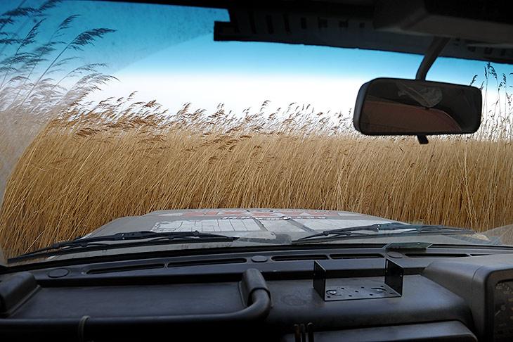 Участки болот, которым посчастливилось не сгореть, могут похвастать двухметровой травой. Хрустя, как большие полевые мыши,               автомобильчики ломятся сквозь кочкастые заросли.