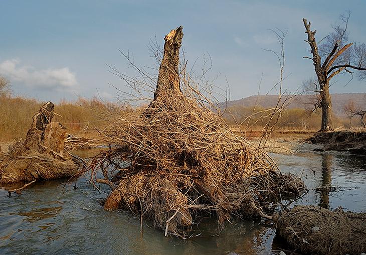 Чуть выше по течению раскинулось нетронутое царство пней и древесных грибов. Мохнатые пирамиды речного мусора обсижены первыми               повылазившими на сушу ручейниками, топорщащими свои тщедушные тельца в холодных лучах апрельского солнца.