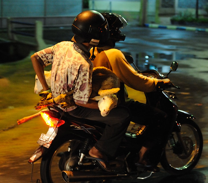 Пронесясь по ночным улицам Сурабаи (Surabaya) - столице Восточной Явы, уже под утро добрались до ночлежки на склонах вулкана. Встречать               рассвет и морозить сопли, пытаясь разглядеть укрытый кромешной тьмой горный пейзаж, тут принято аж в пять утра. Или красоты Бромо видны               лишь в первых лучах солнца, или живущим в жарком климате индонезийцам хочется хоть раз по-настоящему замерзнуть, а может в неспешном               ритме здешней жизни встреча какого-либо восхода сама по себе является экстраординарным событием.