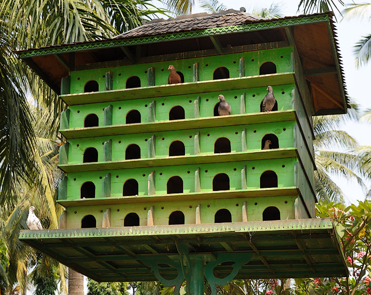 Во всем мире с голубями в городах принято бороться, например, в соседнем Сингапуре за кормление птиц предусмотрен огромный штаф. И лишь радушные индонезийцы понаставили на главной площади страны кучу голубятен, как ульи               заселенных полчищами голубей. Птичий помет на памятниках мало волнует городские власти, дескать куда там голубям тягаться с нашим народом в способности загаживать улицы.