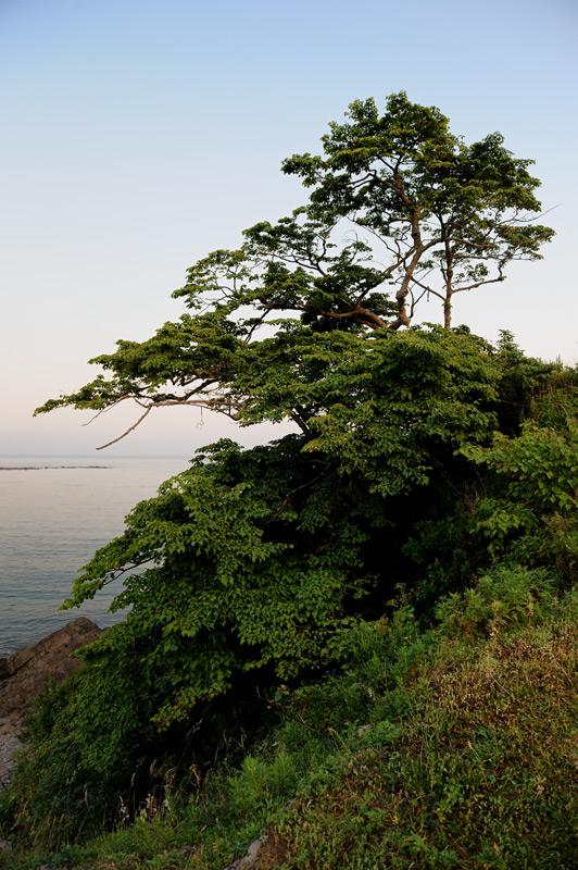 Ну и прочая традиционная береговая растительность, мохнатящая склонившиеся над прибоем черные скалы.